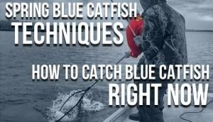 Spring Blue Catfish Techniques