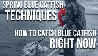 Spring Blue Catfish
