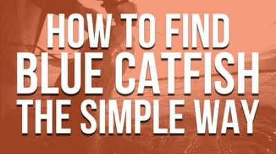 How To Find Blue Catfish Simple Way 450