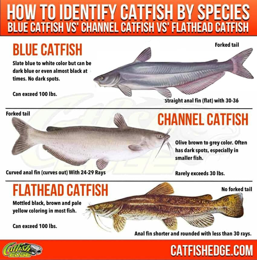 What is good catfish bait