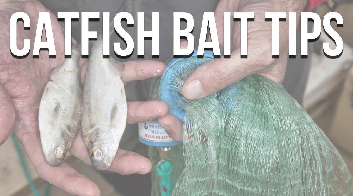 Catfish Bait Tips