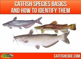 "Catfish Species Essentials: The ""Big Three"" Types Of Catfish"