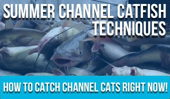 Summer Channel Catfish