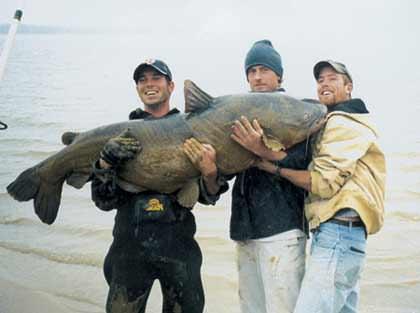 World Record Catfish, The Largest Catfish Ever Caught World Record Blue Catfish Cody Mullenix