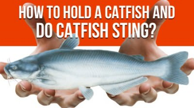 How To Hold a Catfish and Do Catfish Sting