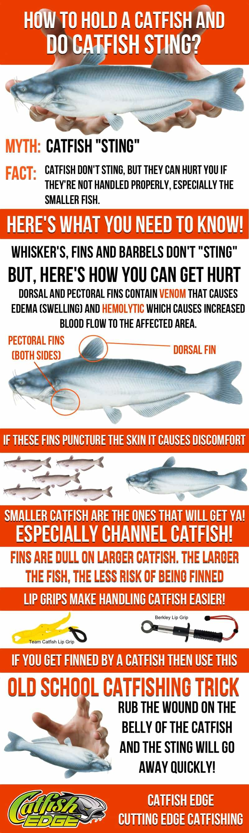 How To Hold a Catfish and Do Catfish