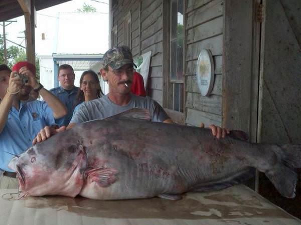 Missouri World Record Blue Catfish