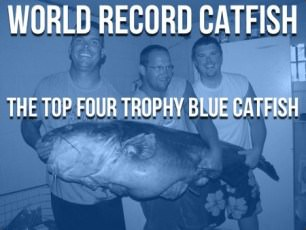 Virginia World Record Blue Catfish 450