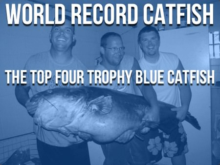 World Record Catfish, The Top 4 Trophy Blue Cats
