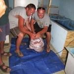 World Record Catfish Buggs Island Virginia