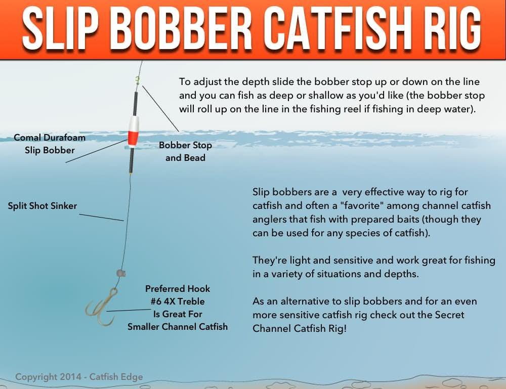 channel catfish vs blue catfish