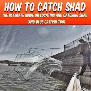 How To Catch Shad: Catching Shad Book