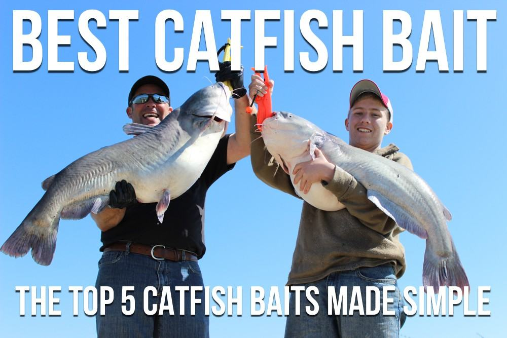 Best Catfish Bait Ever For River Fishing Spring Channel ...