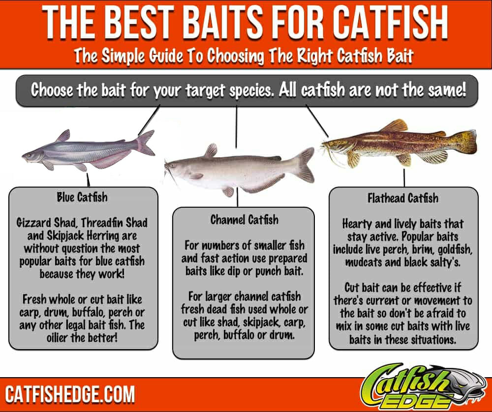 Best catfish bait the top 5 catfish baits made simple for Best lures for river fishing