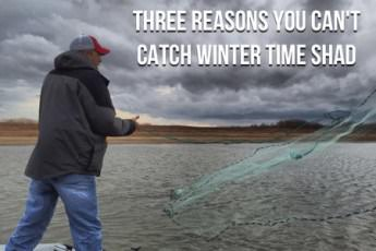 Three Reasons You Can't Catch Winter Time Shad [EP4]