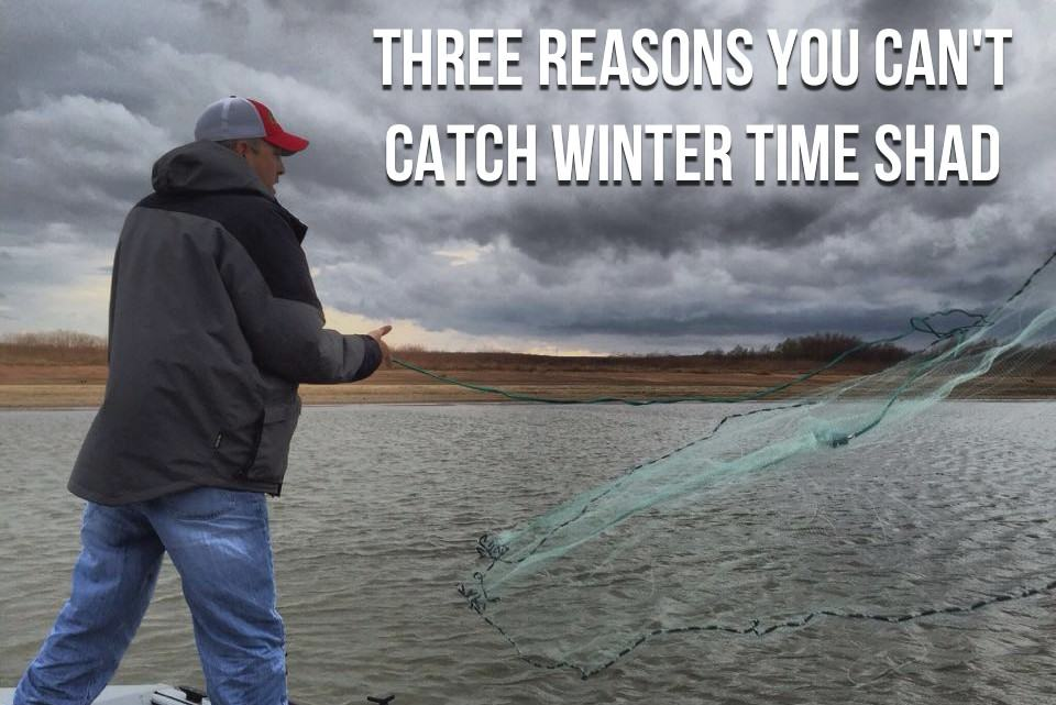 Catching Winter Time Shad