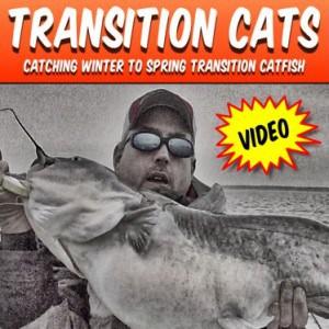 Transition Catfish Video