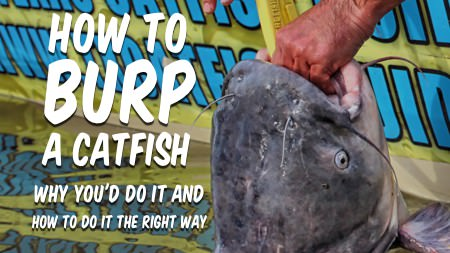 Burping Catfish? Why You Should [and The RIGHT Way To Do It]