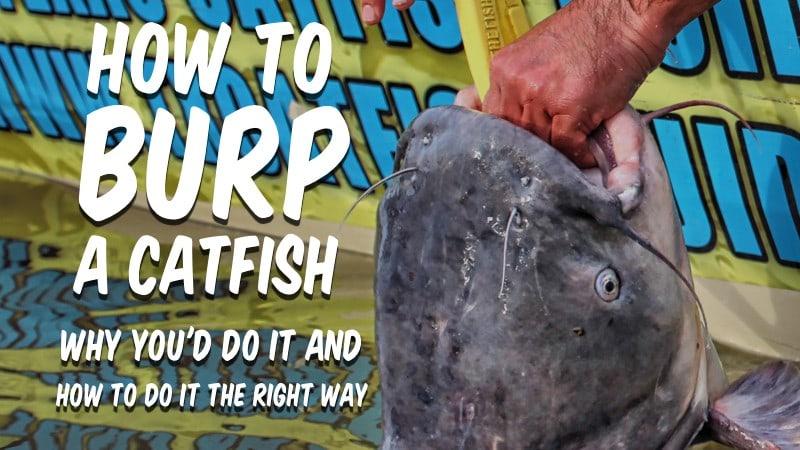 How To Burp a Catfish