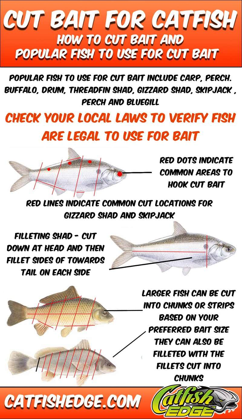 Cut bait for catfish all you need to know about cutbait for Live to fish
