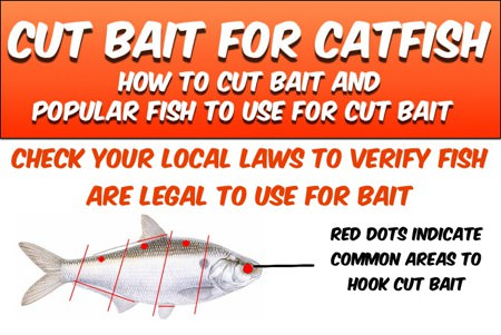 how to catch flathead with live bait