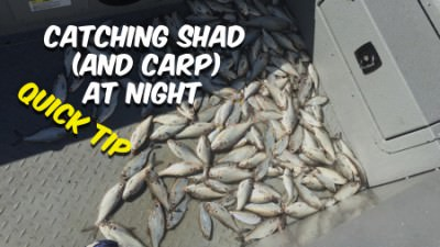 Catching Shad At Night (and Carp) For Catfish Bait [Quick Tip]