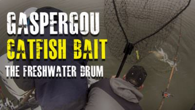 Gaspergou Catfish Bait [The Freshwater Drum]