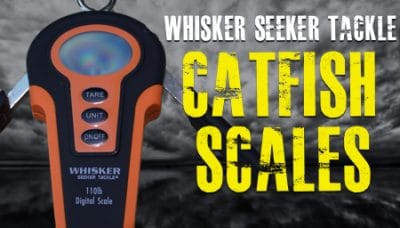 Catfish Scales From Whisker Seeker Tackle