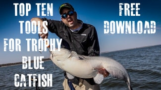 Top 10 Tools For Trophy Blue Catfish